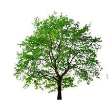 émondage arbre