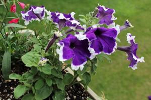 paysagiste fleurs